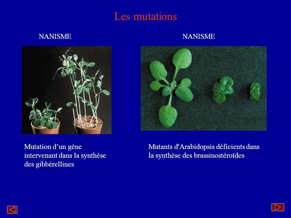 Les mutations NANISME NANISME