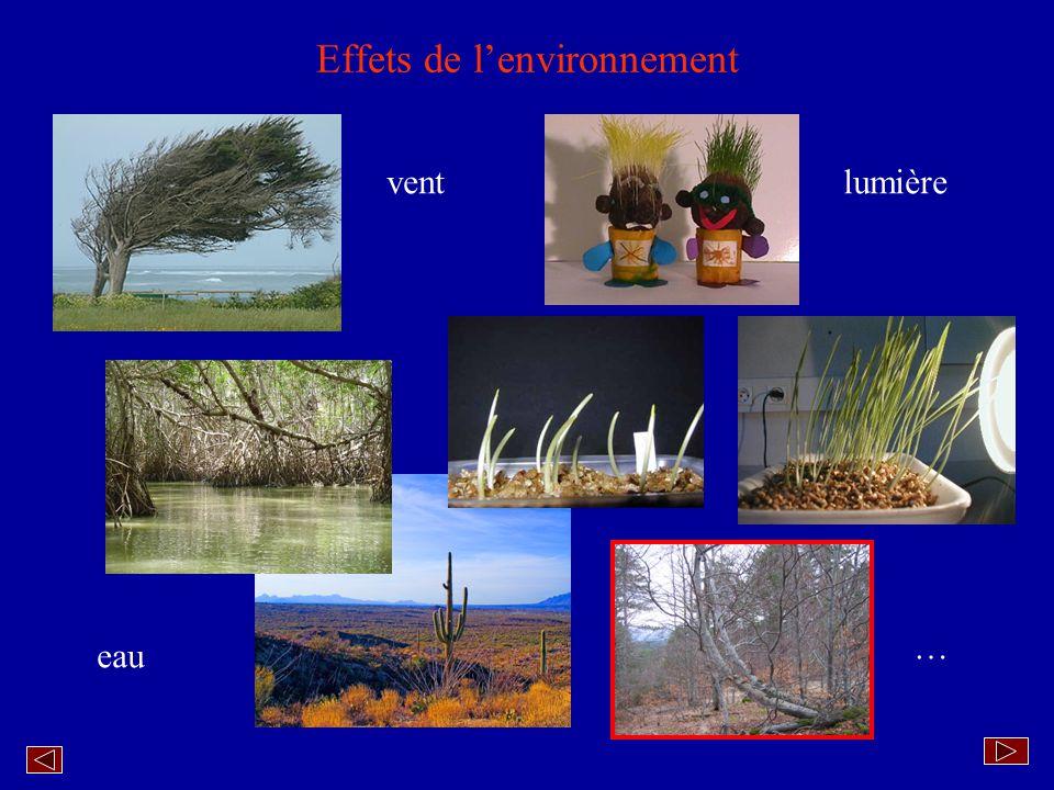 Effets de l'environnement