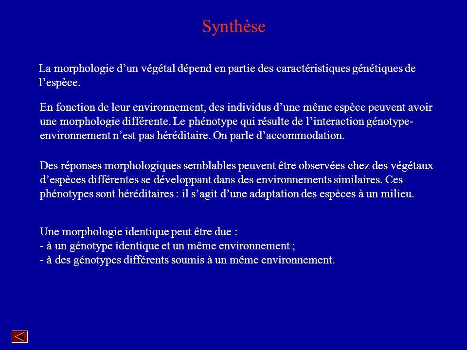 Synthèse La morphologie d'un végétal dépend en partie des caractéristiques génétiques de l'espèce.