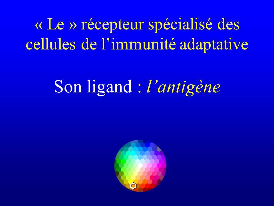 « Le » récepteur spécialisé des cellules de l'immunité adaptative