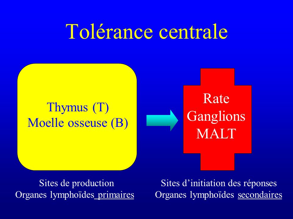 Tolérance centrale Rate Ganglions MALT Thymus (T) Moelle osseuse (B)