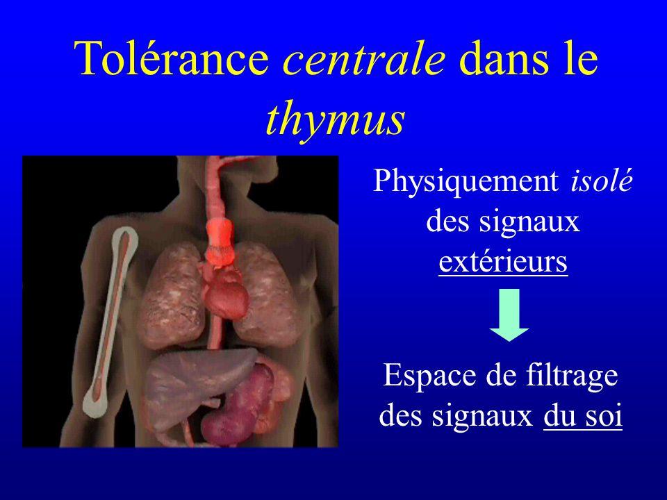 Tolérance centrale dans le thymus