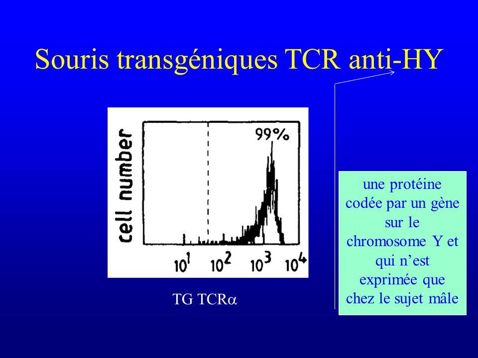 Souris transgéniques TCR anti-HY