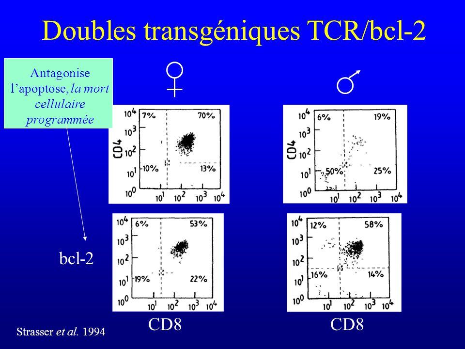 Doubles transgéniques TCR/bcl-2