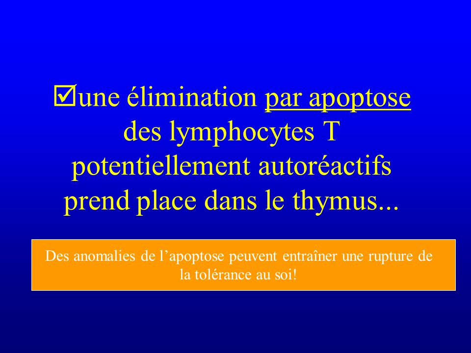 une élimination par apoptose des lymphocytes T potentiellement autoréactifs prend place dans le thymus...