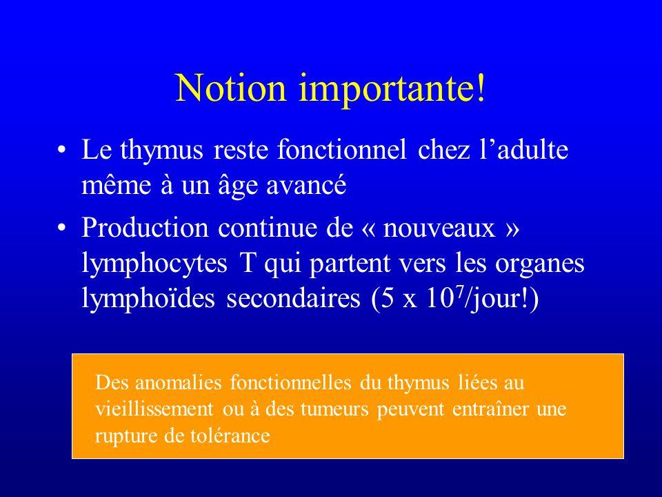 Notion importante! Le thymus reste fonctionnel chez l'adulte même à un âge avancé.