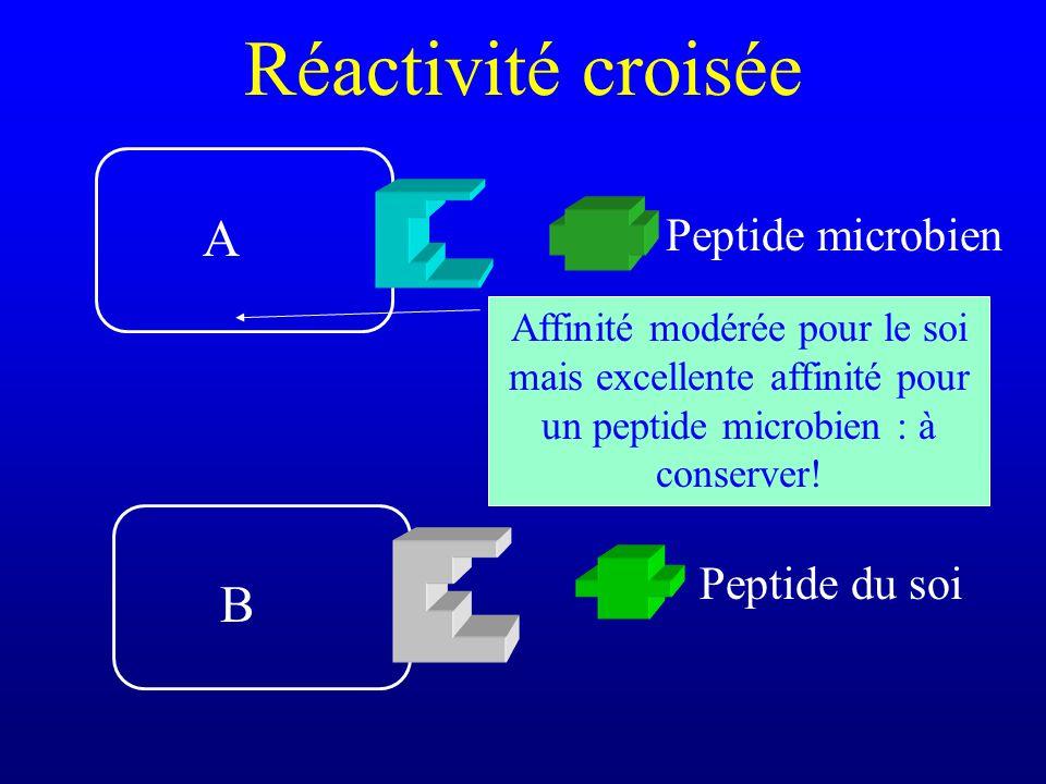 Réactivité croisée A B Peptide microbien Peptide du soi