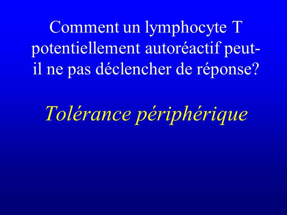 Comment un lymphocyte T potentiellement autoréactif peut-il ne pas déclencher de réponse.