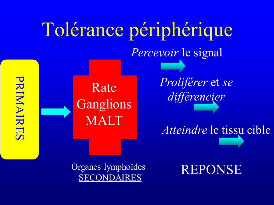 Tolérance périphérique