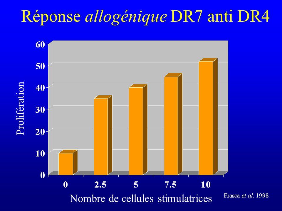 Réponse allogénique DR7 anti DR4
