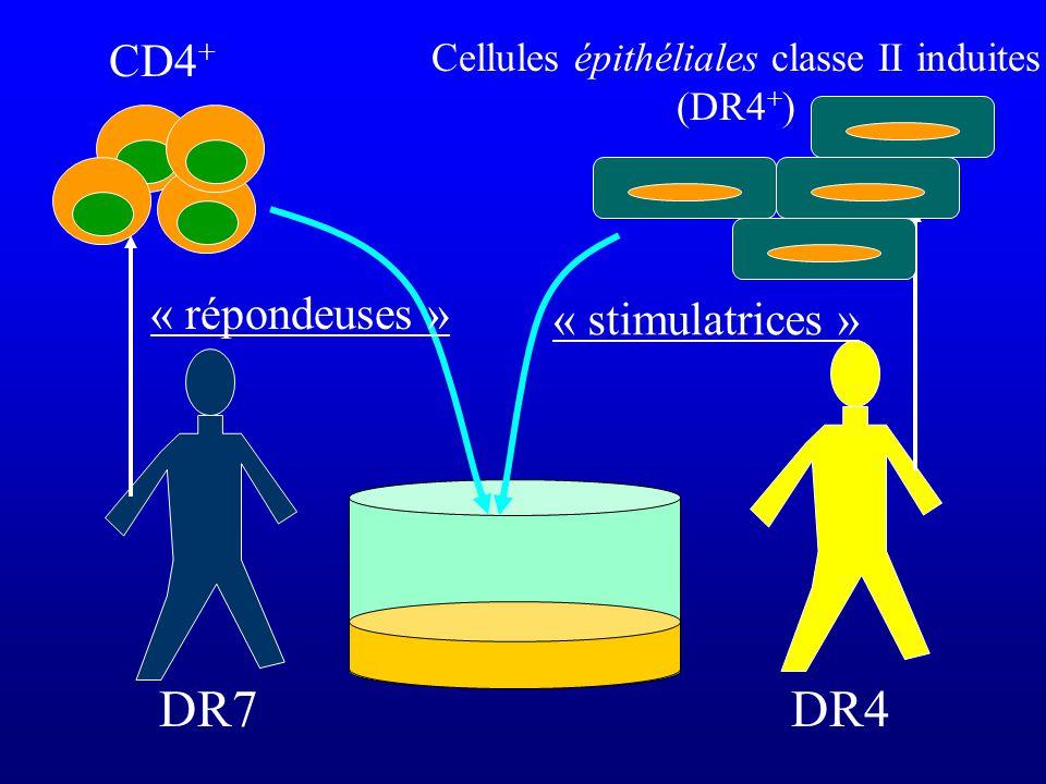 Cellules épithéliales classe II induites (DR4+)