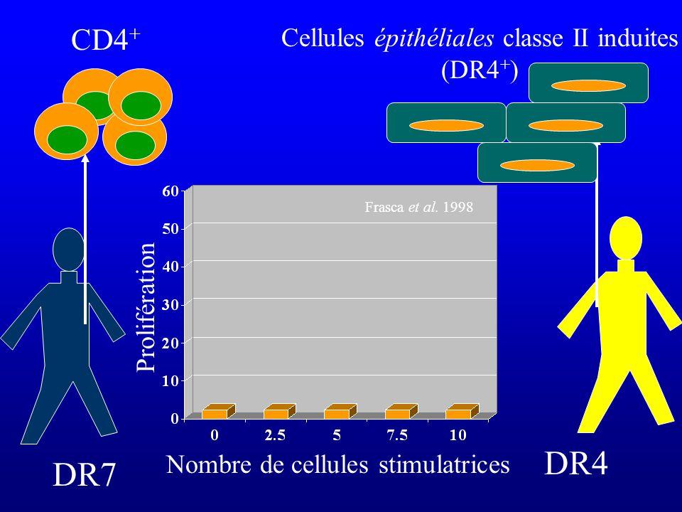 DR4 DR7 CD4+ Cellules épithéliales classe II induites (DR4+)