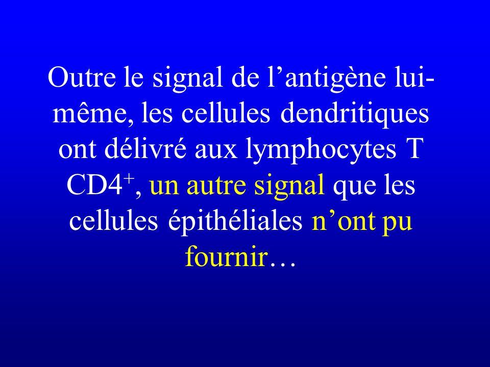 Outre le signal de l'antigène lui-même, les cellules dendritiques ont délivré aux lymphocytes T CD4+, un autre signal que les cellules épithéliales n'ont pu fournir…