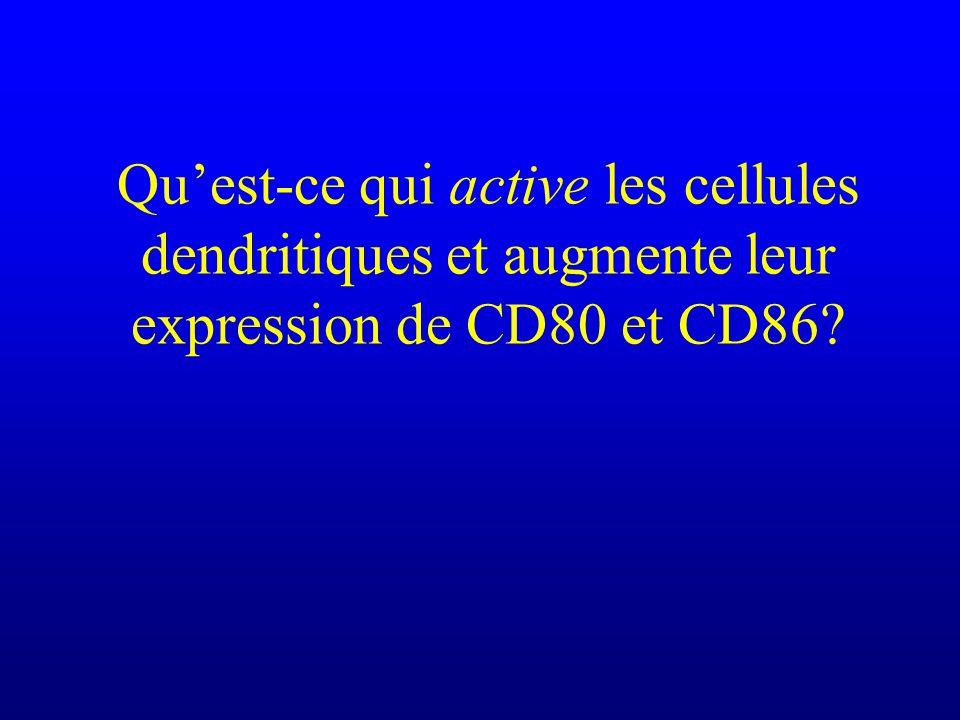 Qu'est-ce qui active les cellules dendritiques et augmente leur expression de CD80 et CD86
