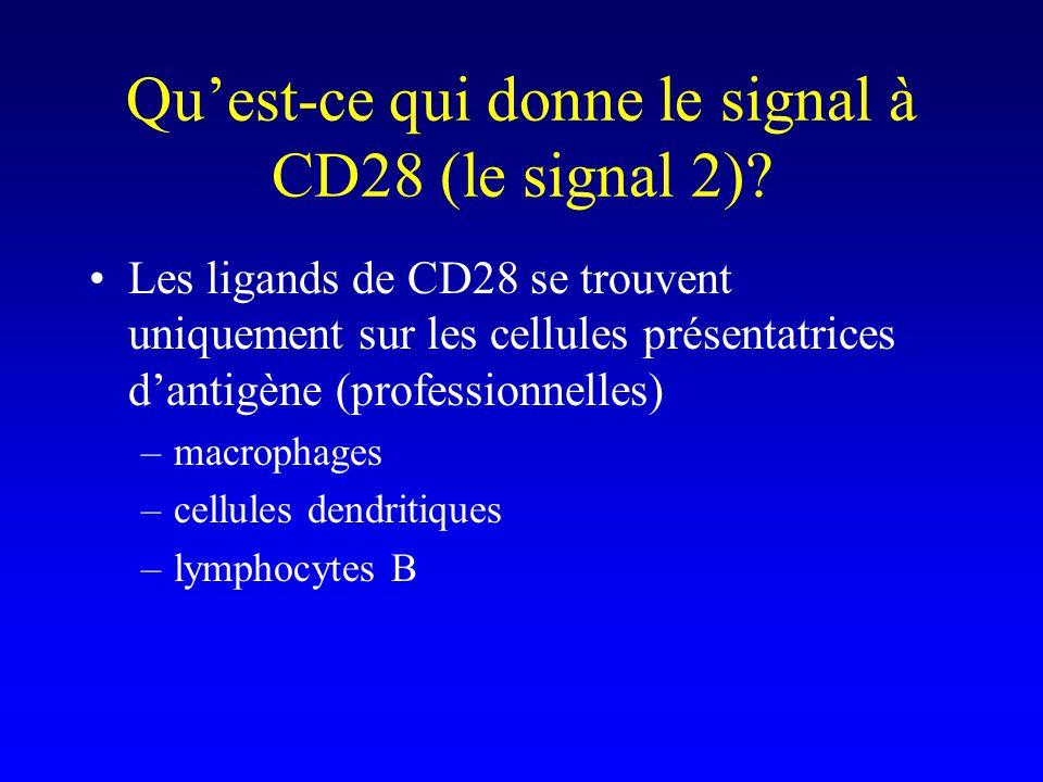 Qu'est-ce qui donne le signal à CD28 (le signal 2)