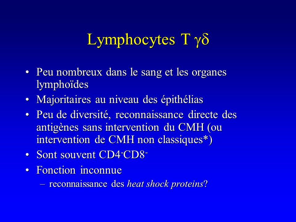 Lymphocytes T gd Peu nombreux dans le sang et les organes lymphoïdes