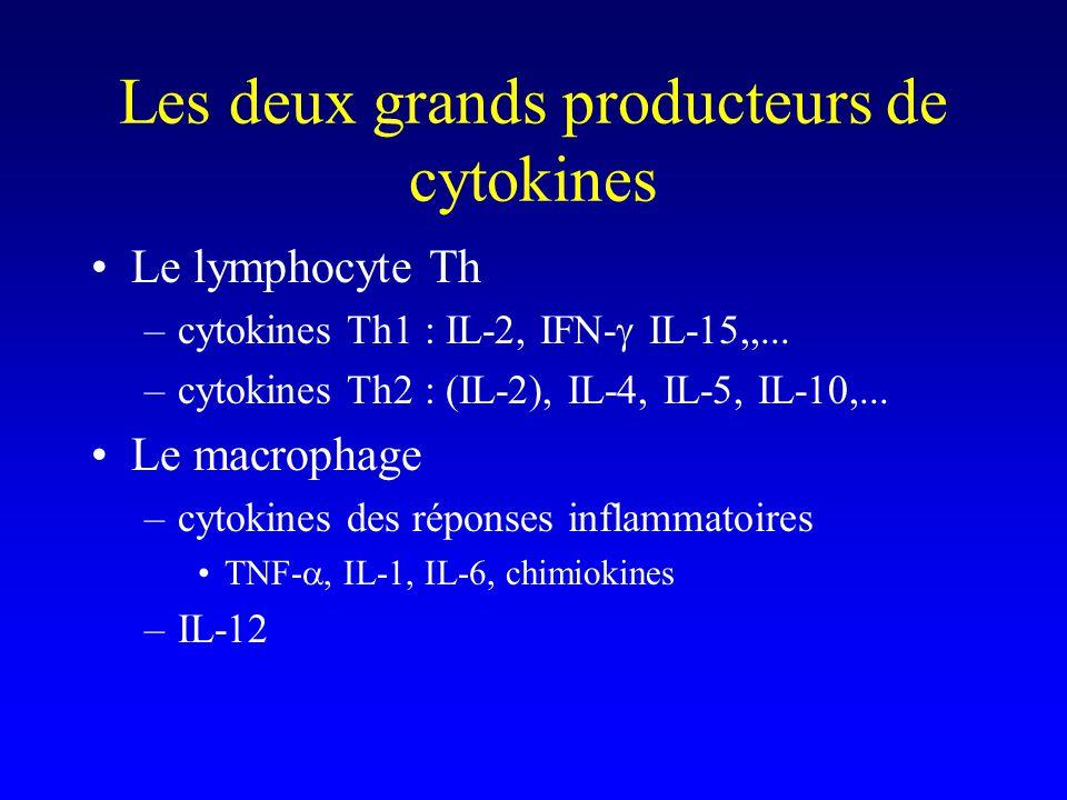 Les deux grands producteurs de cytokines