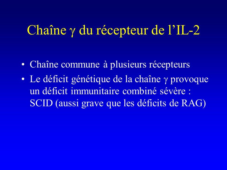 Chaîne g du récepteur de l'IL-2