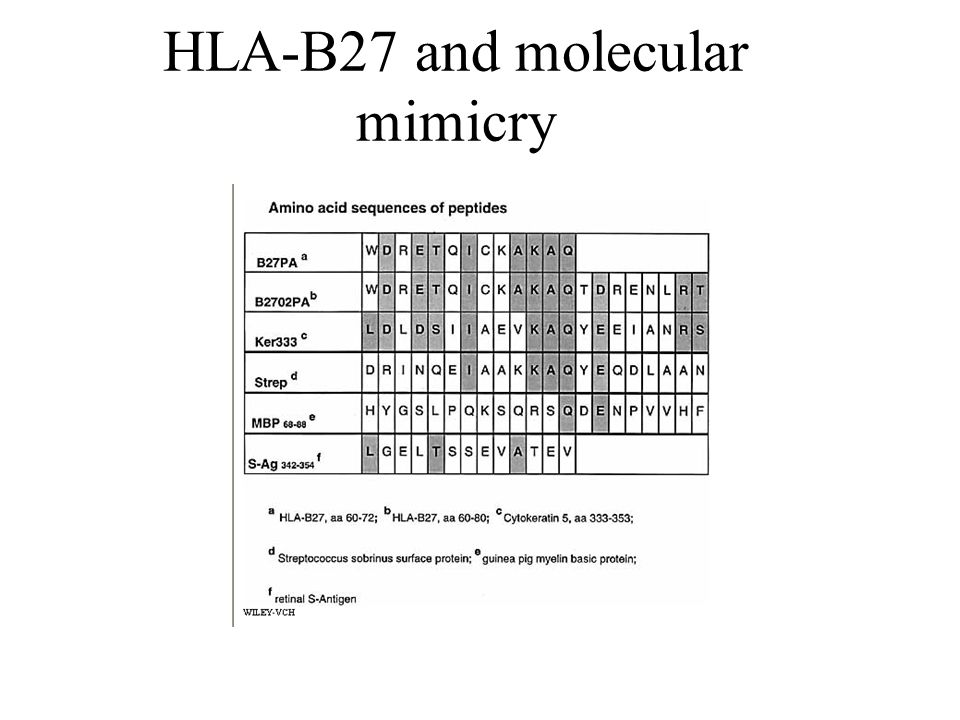 HLA-B27 and molecular mimicry