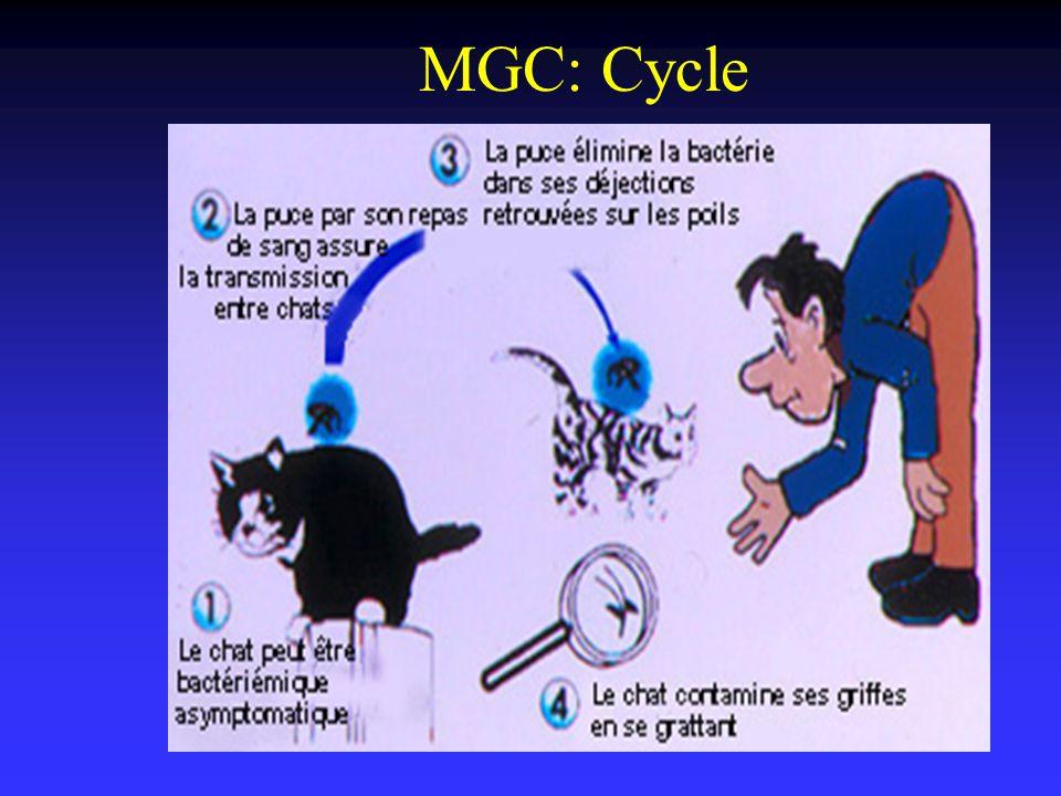 MGC: Cycle