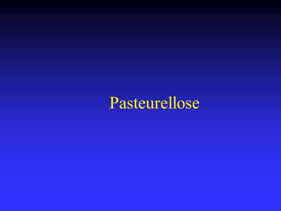 Pasteurellose