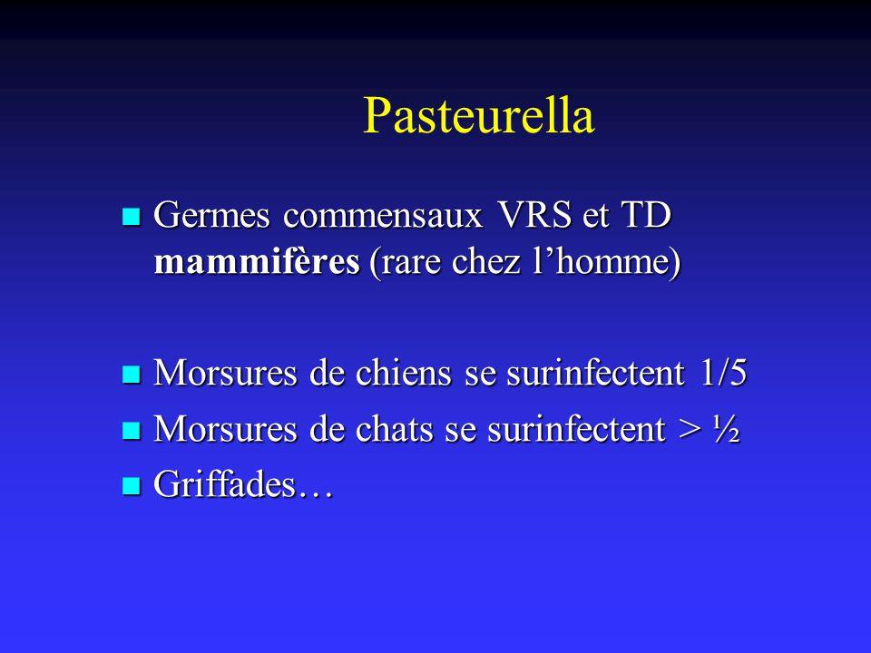 Pasteurella Germes commensaux VRS et TD mammifères (rare chez l'homme)