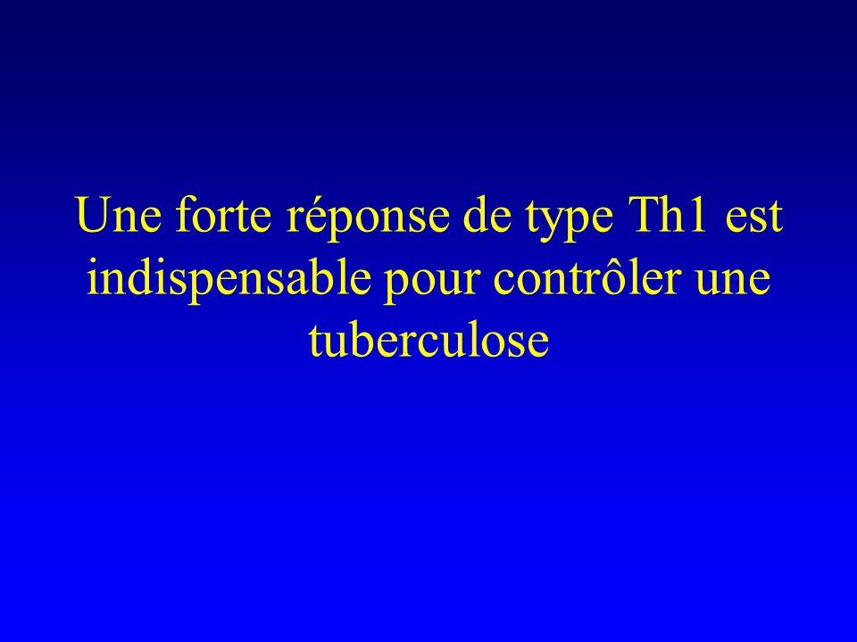 Une forte réponse de type Th1 est indispensable pour contrôler une tuberculose