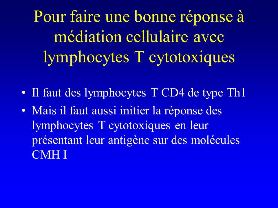 Pour faire une bonne réponse à médiation cellulaire avec lymphocytes T cytotoxiques