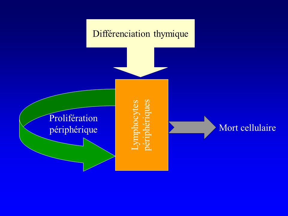 Différenciation thymique