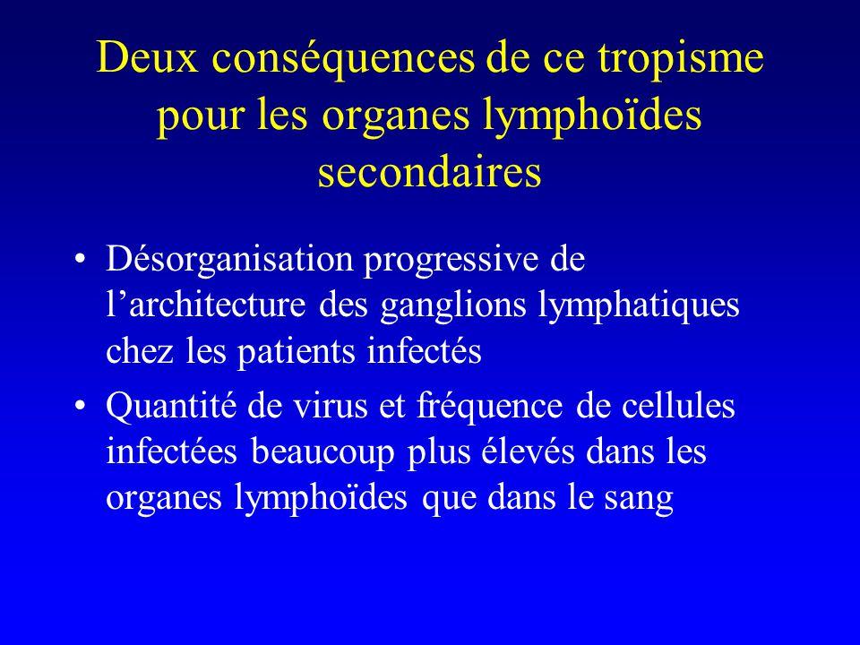 Deux conséquences de ce tropisme pour les organes lymphoïdes secondaires