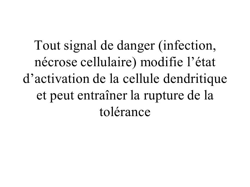 Tout signal de danger (infection, nécrose cellulaire) modifie l'état d'activation de la cellule dendritique et peut entraîner la rupture de la tolérance