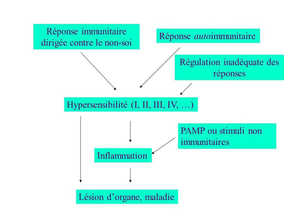 Réponse immunitaire dirigée contre le non-soi Réponse autoimmunitaire