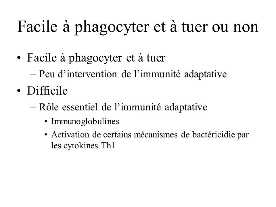 Facile à phagocyter et à tuer ou non