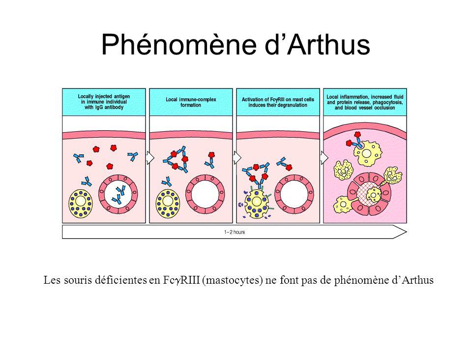 Phénomène d'Arthus Les souris déficientes en FcgRIII (mastocytes) ne font pas de phénomène d'Arthus