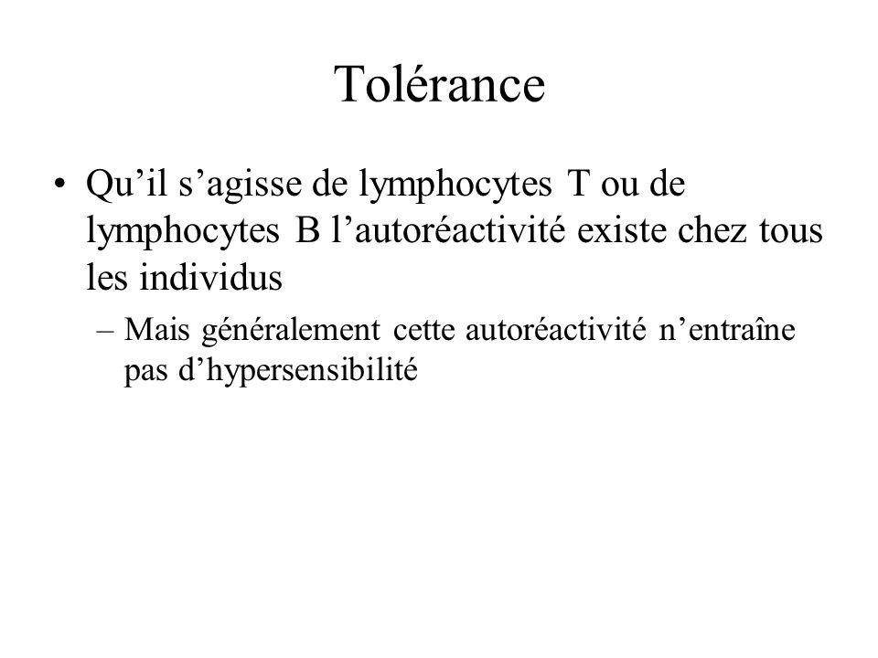 Tolérance Qu'il s'agisse de lymphocytes T ou de lymphocytes B l'autoréactivité existe chez tous les individus.