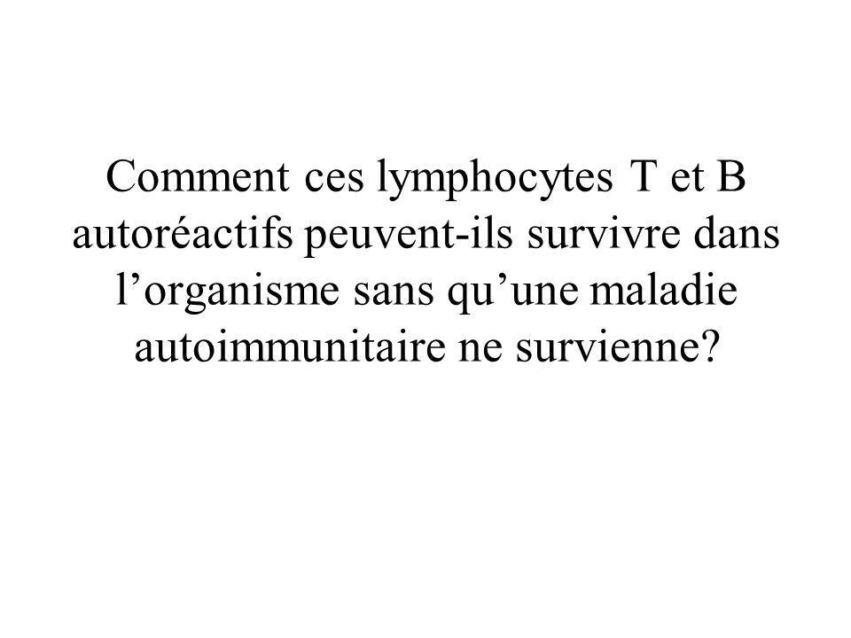 Comment ces lymphocytes T et B autoréactifs peuvent-ils survivre dans l'organisme sans qu'une maladie autoimmunitaire ne survienne