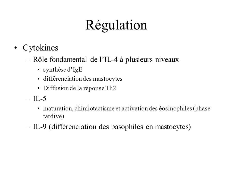 Régulation Cytokines Rôle fondamental de l'IL-4 à plusieurs niveaux