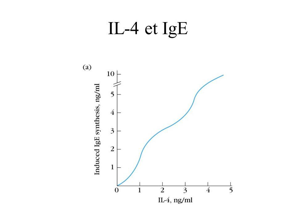 IL-4 et IgE