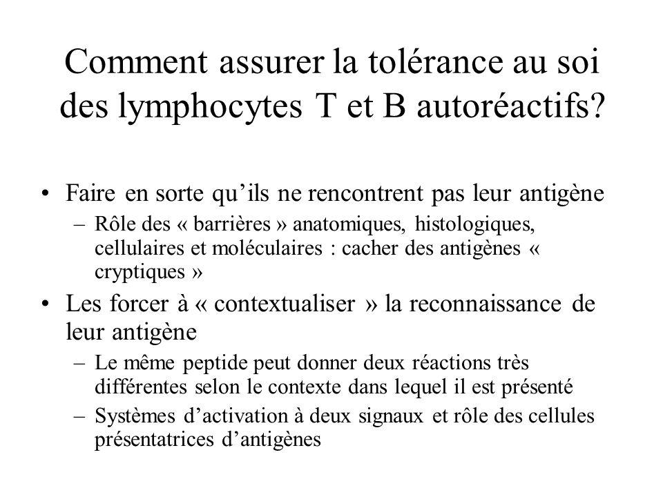 Comment assurer la tolérance au soi des lymphocytes T et B autoréactifs
