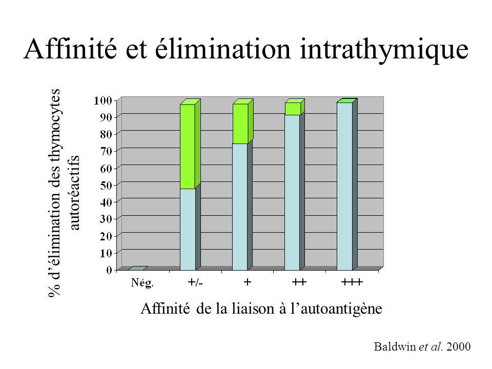 Affinité et élimination intrathymique