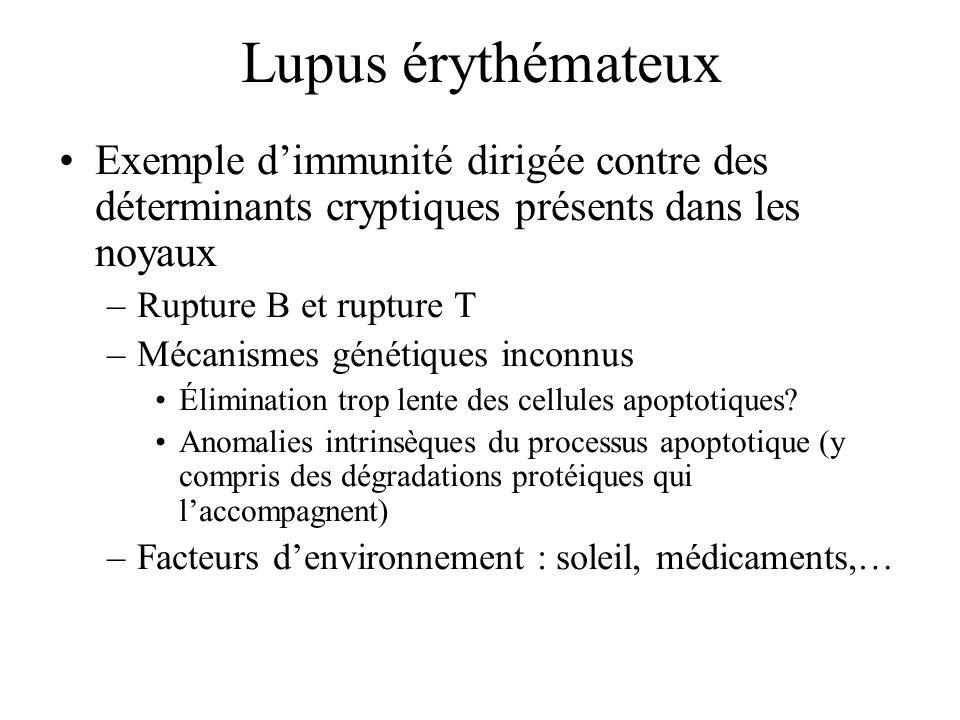 Lupus érythémateux Exemple d'immunité dirigée contre des déterminants cryptiques présents dans les noyaux.