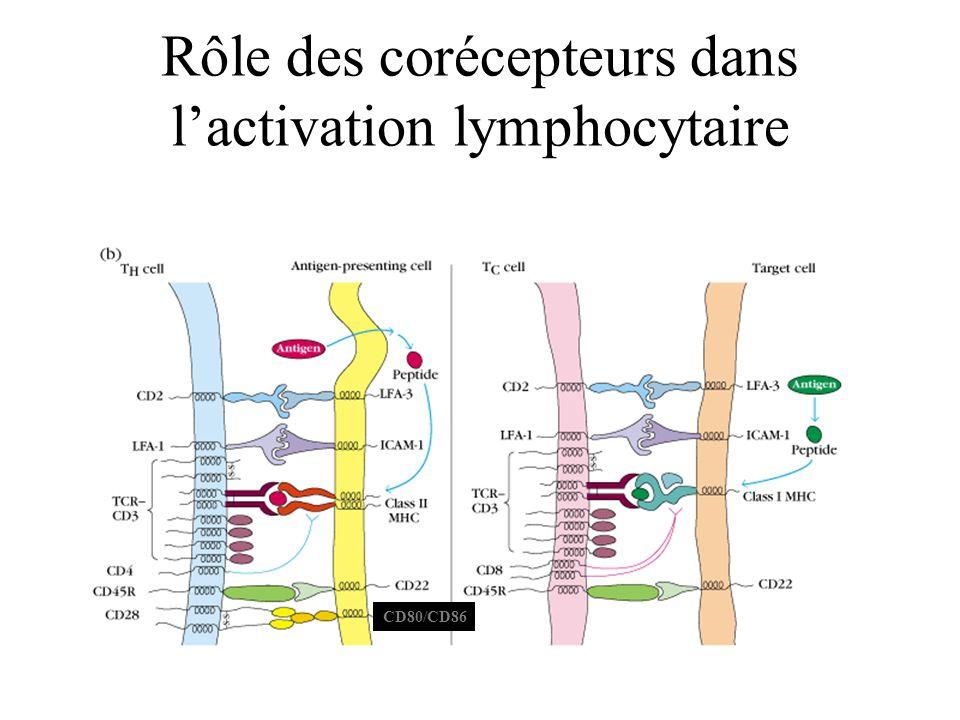 Rôle des corécepteurs dans l'activation lymphocytaire
