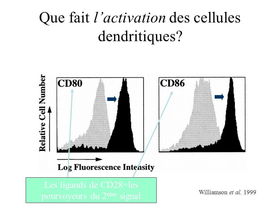 Que fait l'activation des cellules dendritiques