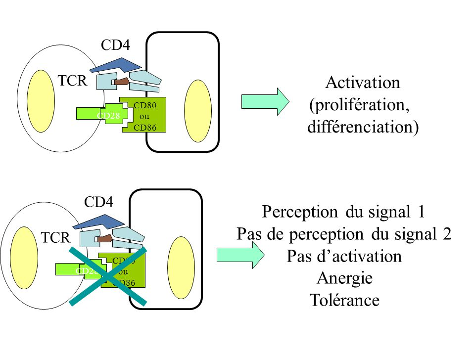Pas de perception du signal 2