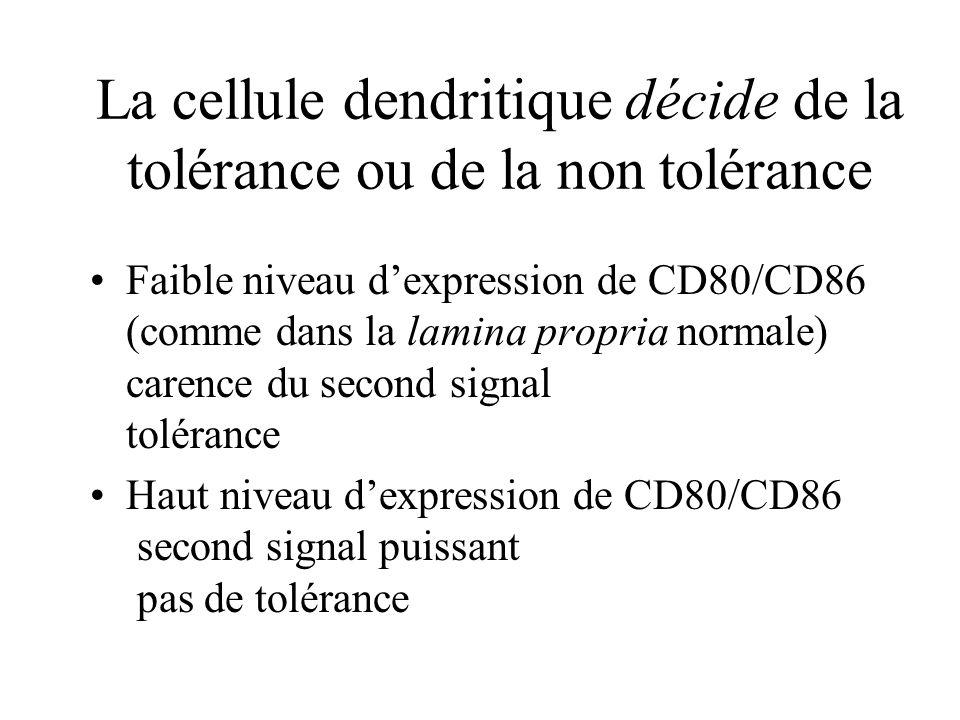 La cellule dendritique décide de la tolérance ou de la non tolérance