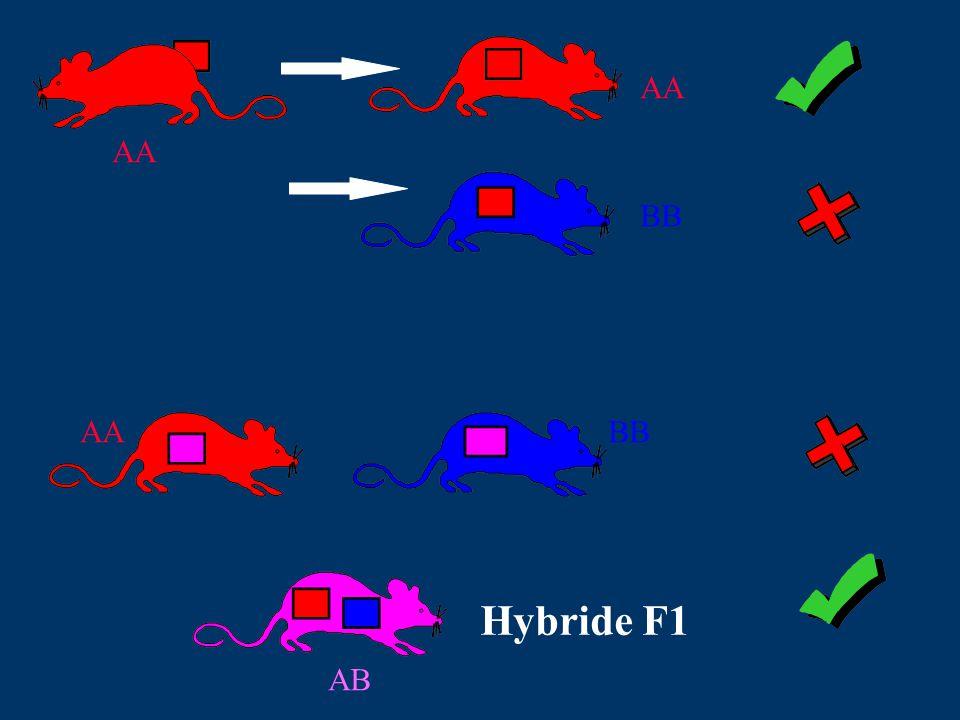 AA BB AA BB Hybride F1 AB