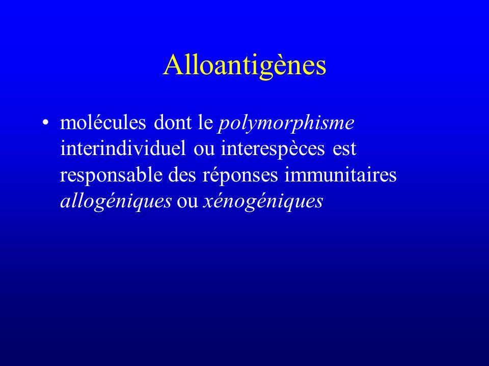 Alloantigènes molécules dont le polymorphisme interindividuel ou interespèces est responsable des réponses immunitaires allogéniques ou xénogéniques.