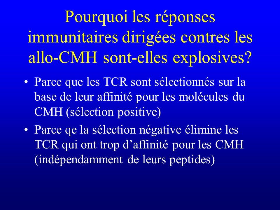 Pourquoi les réponses immunitaires dirigées contres les allo-CMH sont-elles explosives