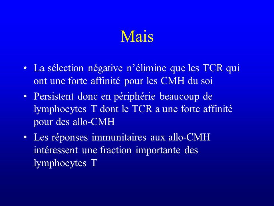 Mais La sélection négative n'élimine que les TCR qui ont une forte affinité pour les CMH du soi.
