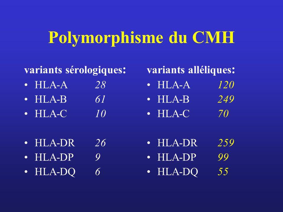 Polymorphisme du CMH variants sérologiques: HLA-A 28 HLA-B 61 HLA-C 10